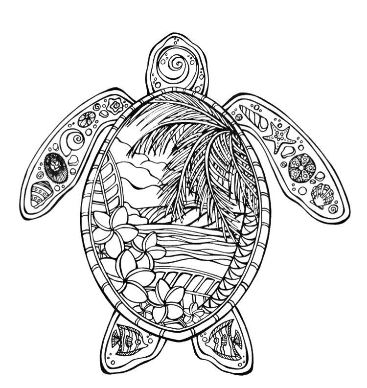 turtle coloring pages for adults zen turtle turtles coloring pages for adults just pages adults for coloring turtle