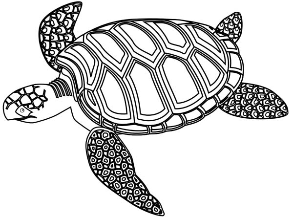 turtles colouring 29 coloring pages of turtle print color craft turtles colouring