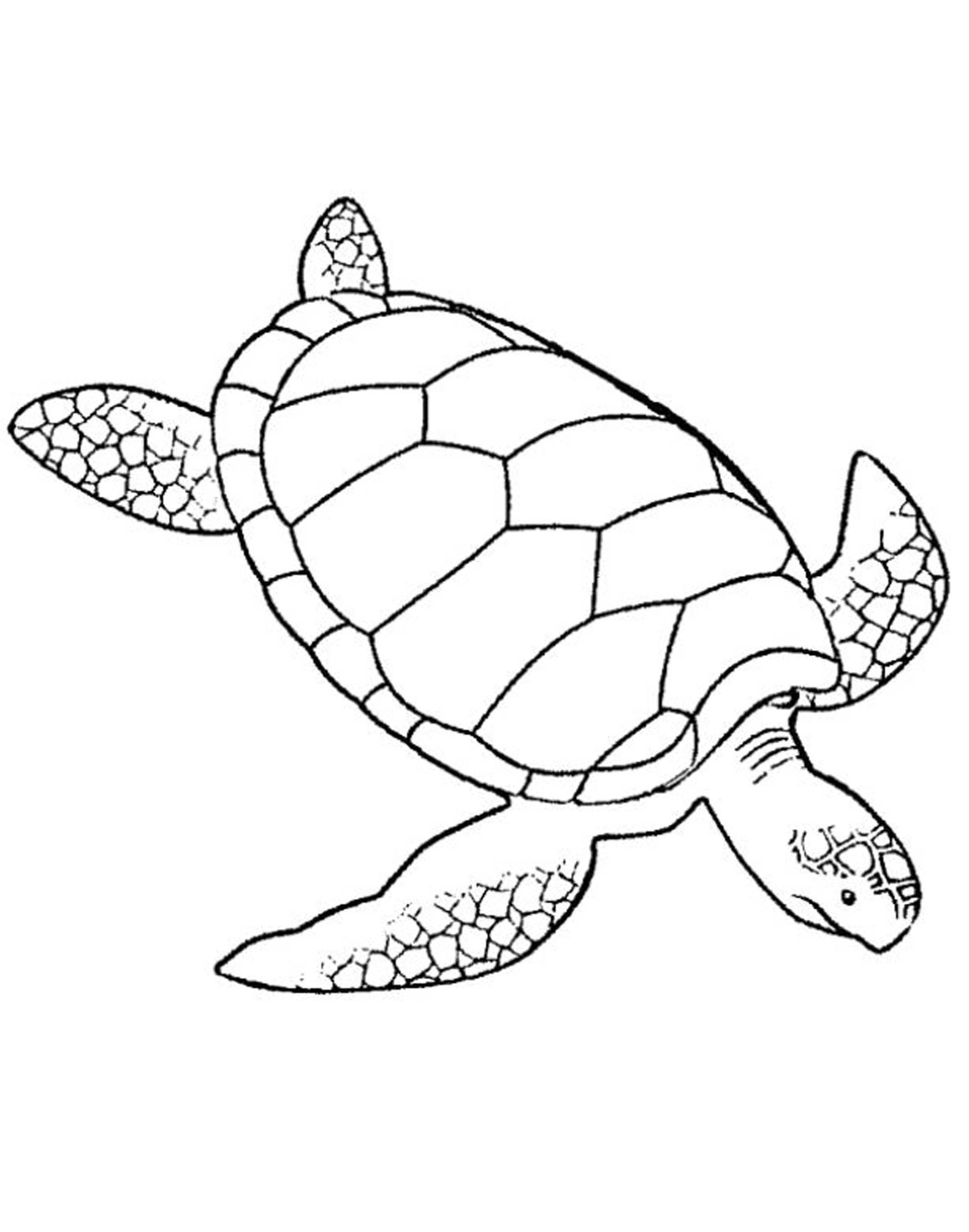 Turtles colouring