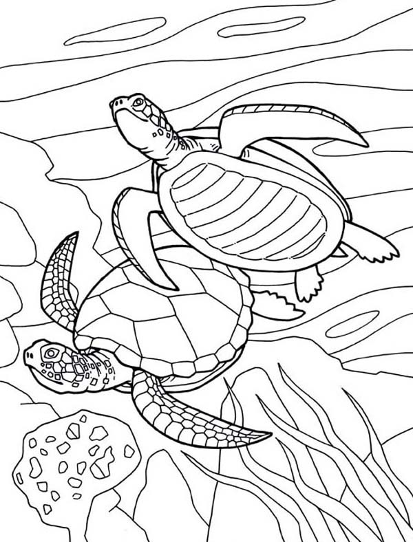 turtles colouring coloring pages turtles free printable coloring pages colouring turtles 1 2