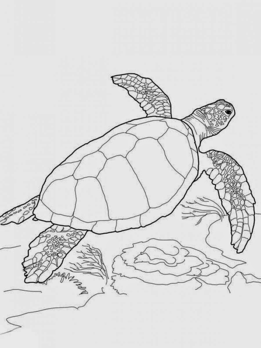 turtles colouring free printable sea turtle coloring pages for kids turtles colouring