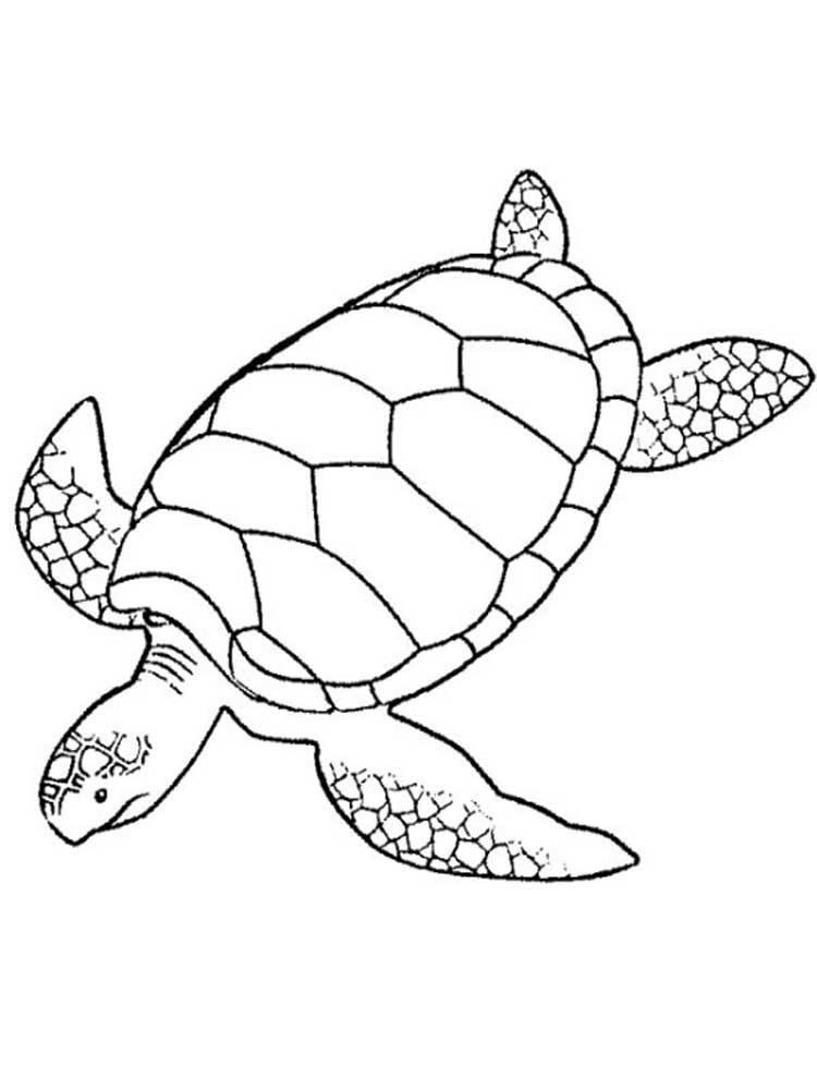 turtles colouring ninja turtles coloring pages from animated cartoons of colouring turtles
