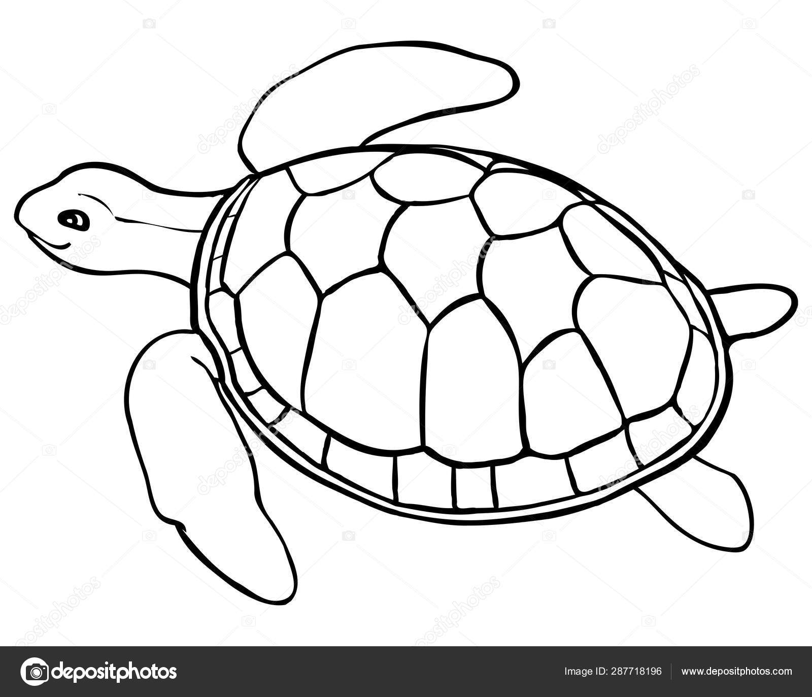 turtles colouring print download turtle coloring pages as the turtles colouring 1 2