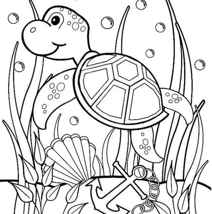 turtles colouring turtle cute animal pages printable for drawing colouring turtles