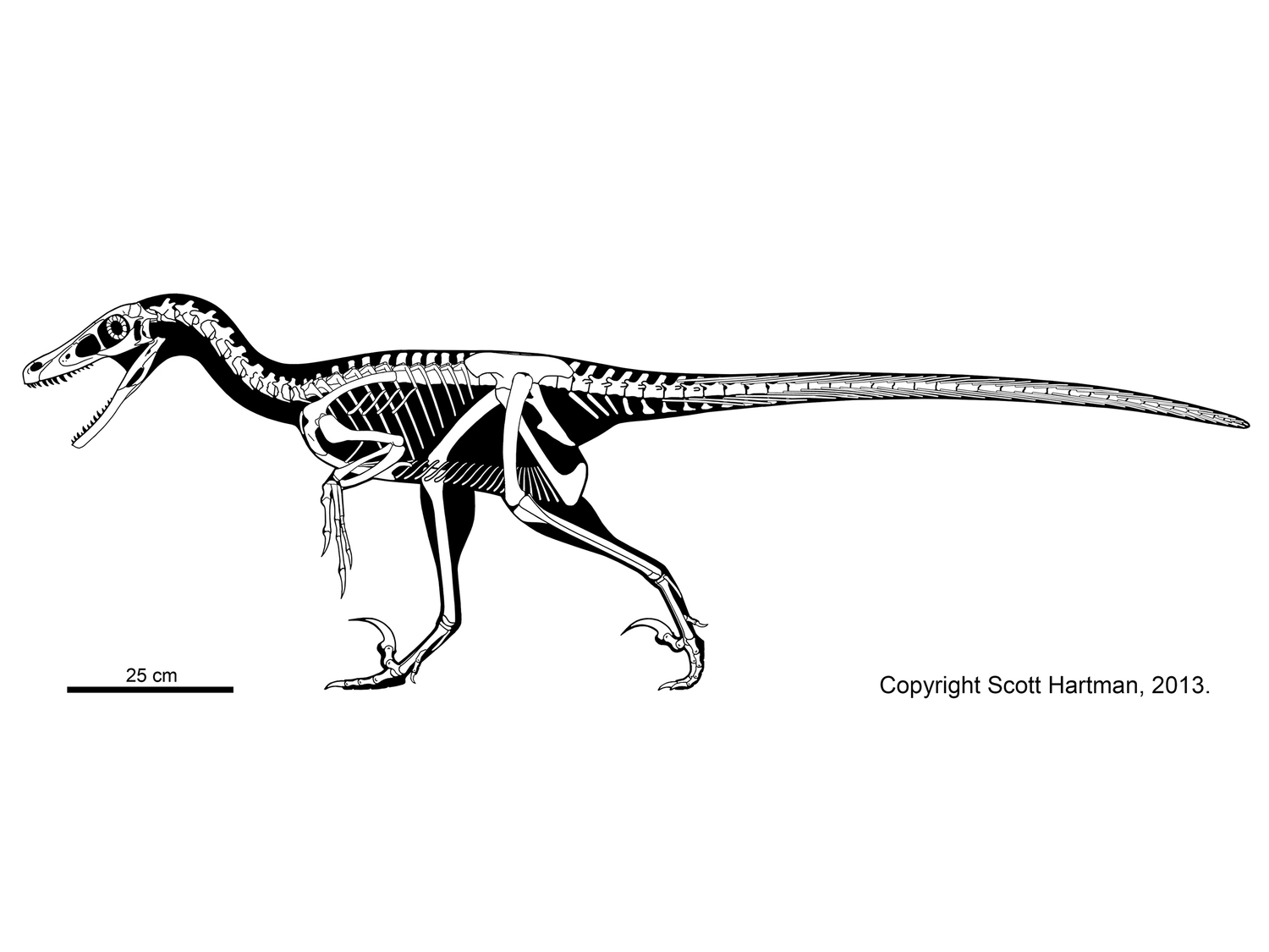 velociraptor pictures how to draw a velociraptor with feathers video step by pictures velociraptor
