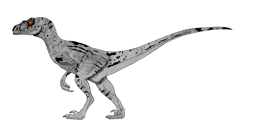 velociraptor pictures velociraptor facts and pictures velociraptor pictures