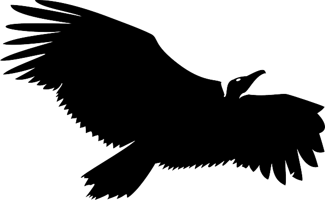 vulture silhouette vulture silhouette black free vector graphic on pixabay vulture silhouette