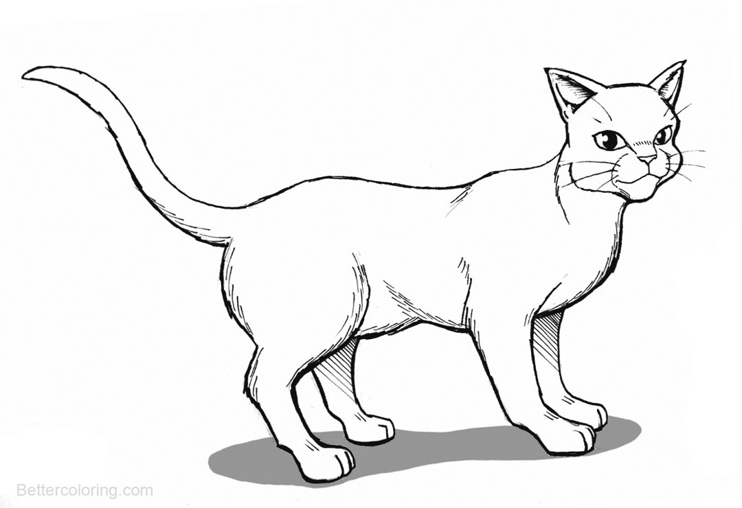 warrior cat coloring pages warrior cat coloring pages to print coloring home pages cat warrior coloring