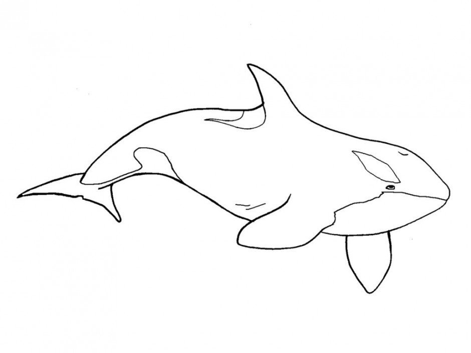 whale outline fish whale clip outline free vector for free download whale outline