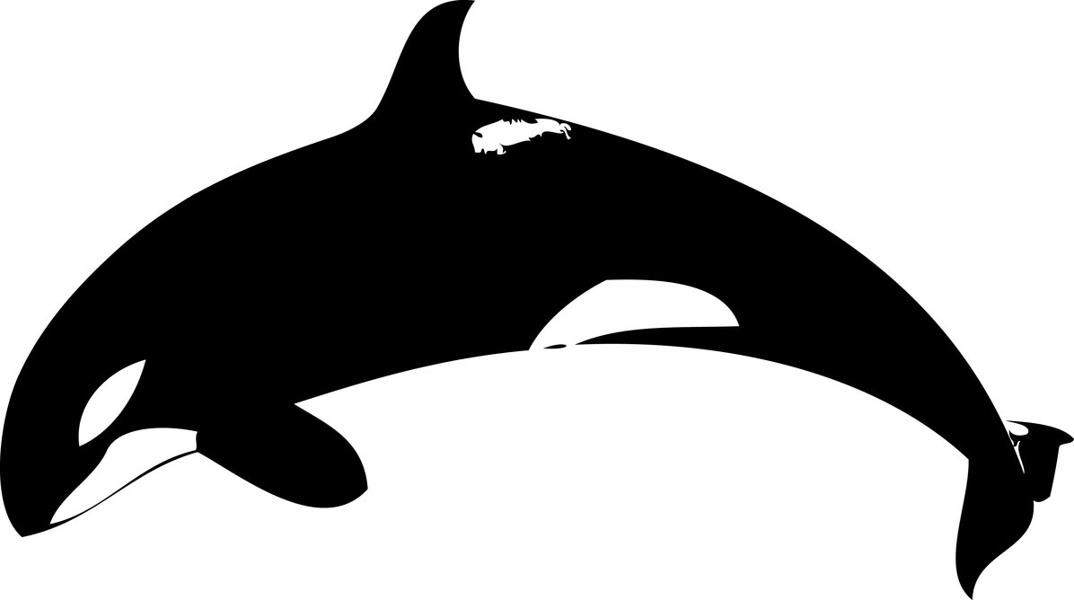 whale outline free whale outline pictures clipartix outline whale
