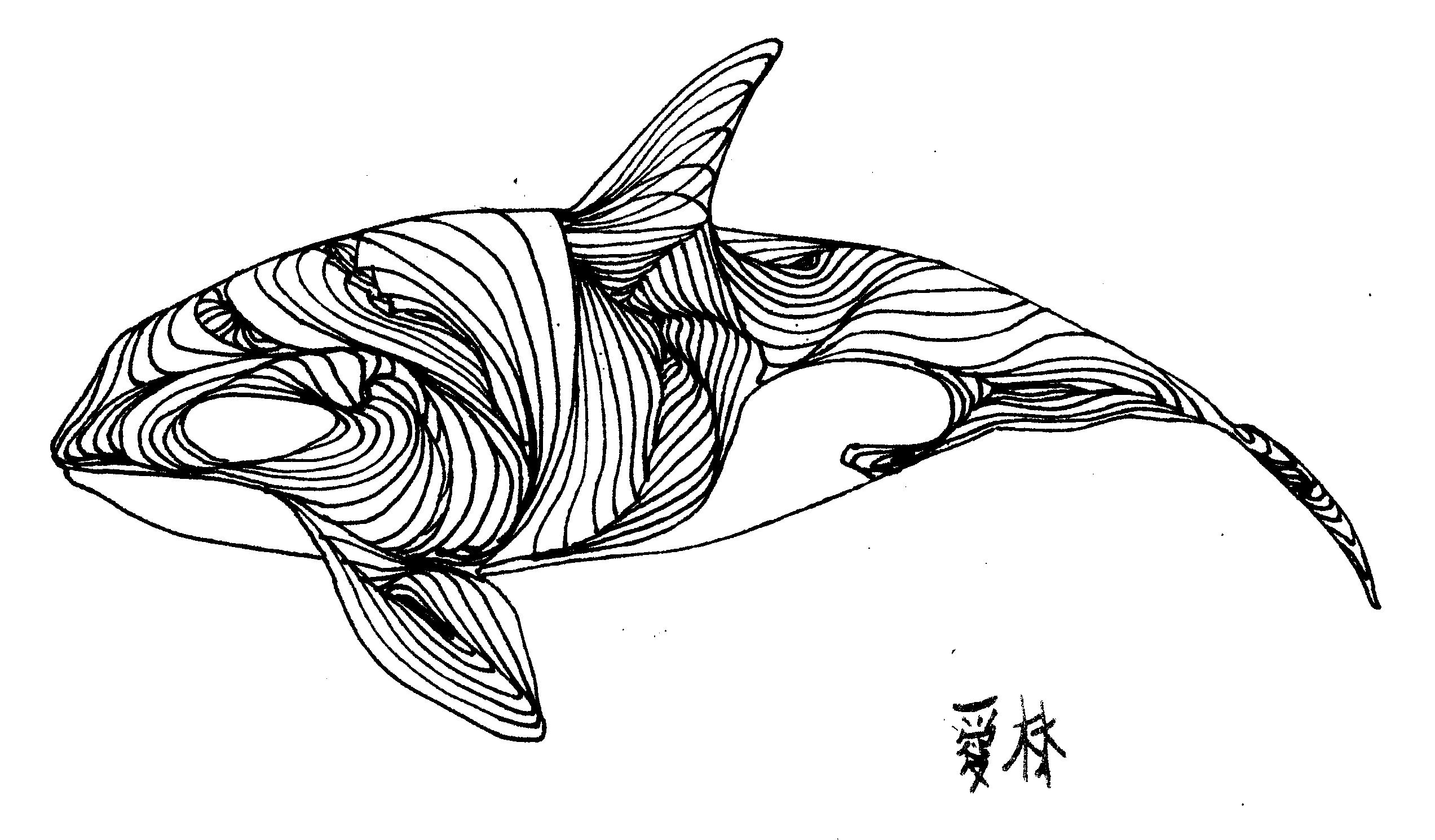 whale outline whale outline clipart clipart suggest outline whale