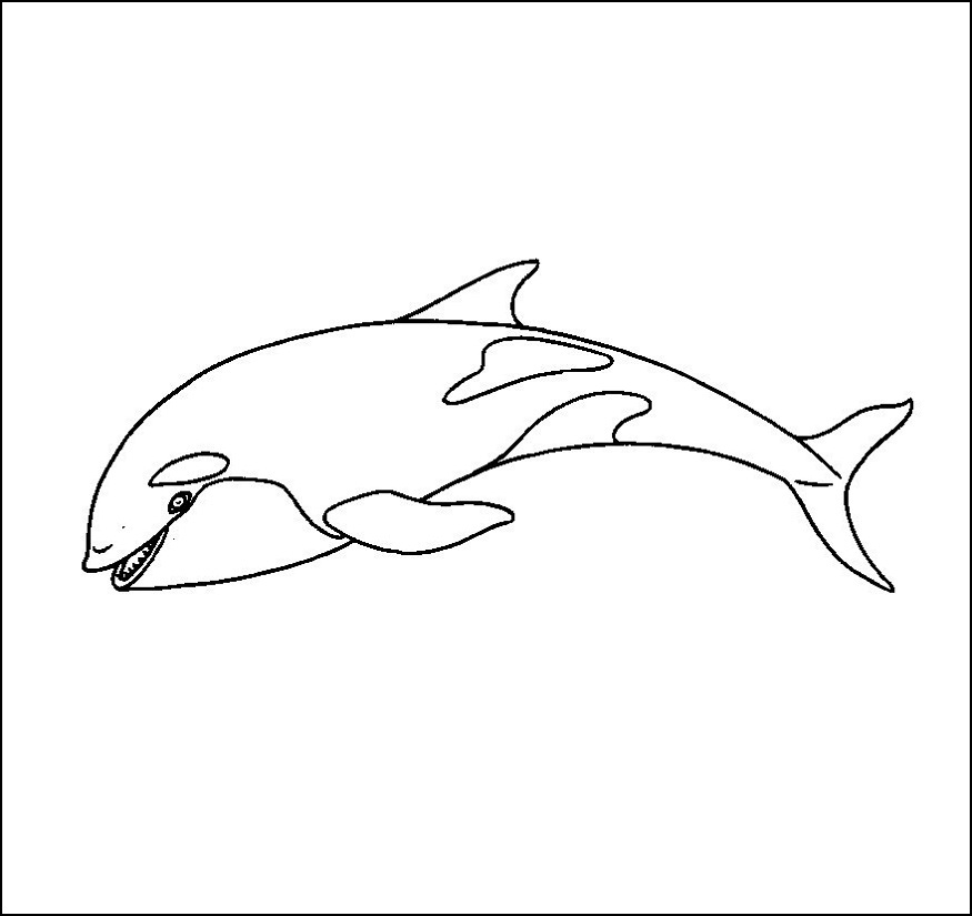 whale outline white whale outline clip art at clkercom vector clip whale outline