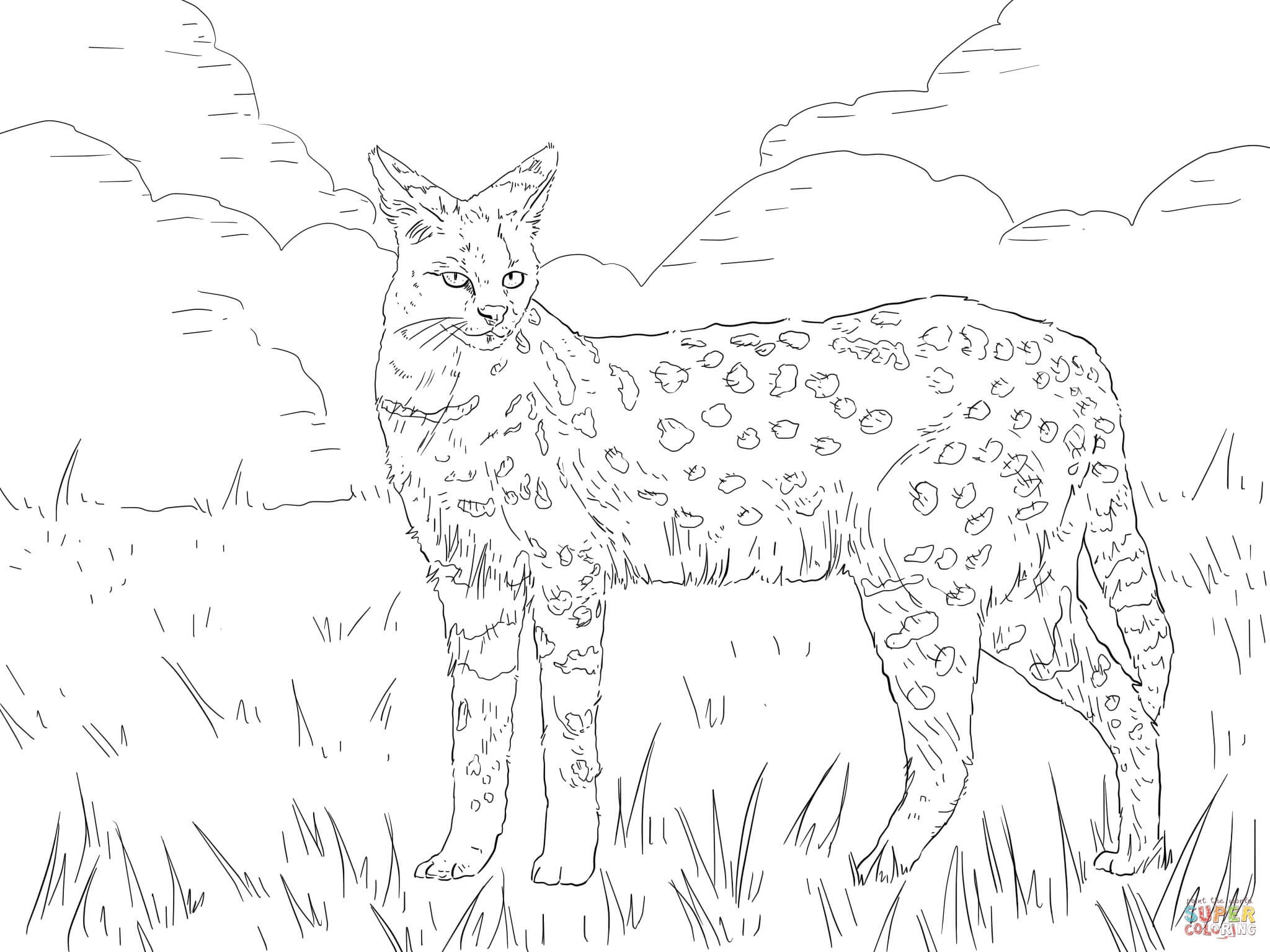 wild cat coloring pages big cat coloring pages pages coloring wild cat
