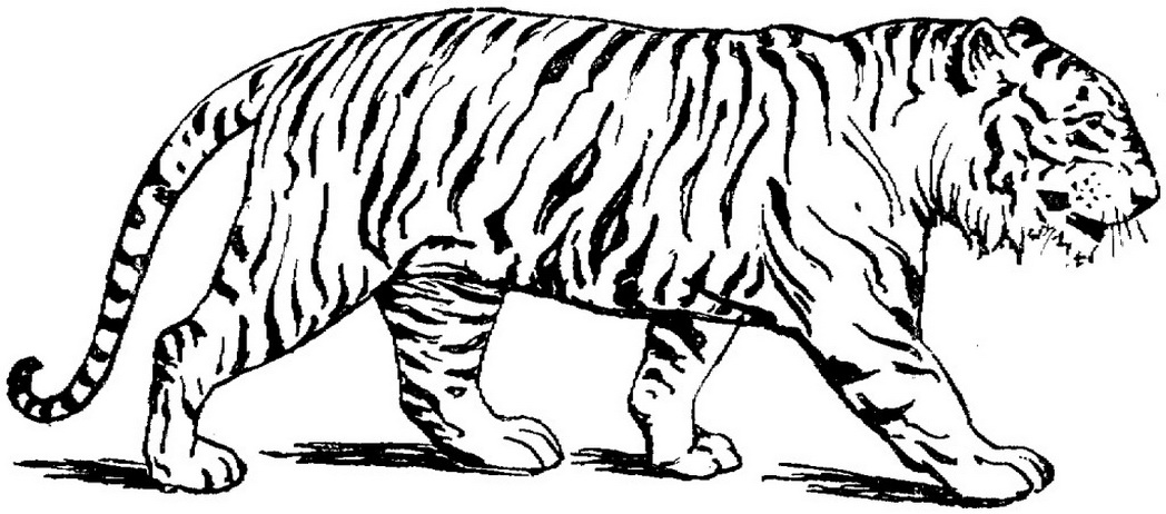 wild cat coloring pages coloring pages for adults realistic animals google pages wild cat coloring