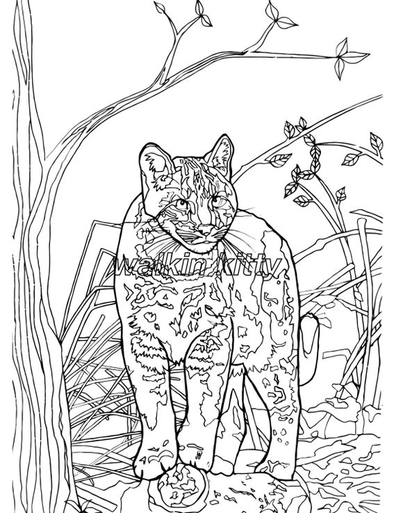 wild cat coloring pages serval colouring page digital product digital download wild pages coloring cat