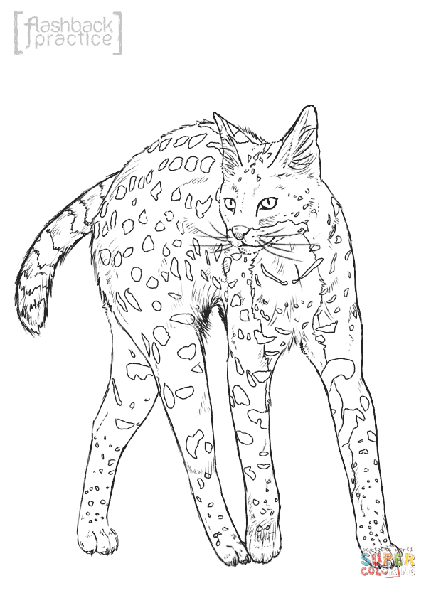 wild cat coloring pages the ocicat is an all domestic breed of cat which resembles wild coloring cat pages