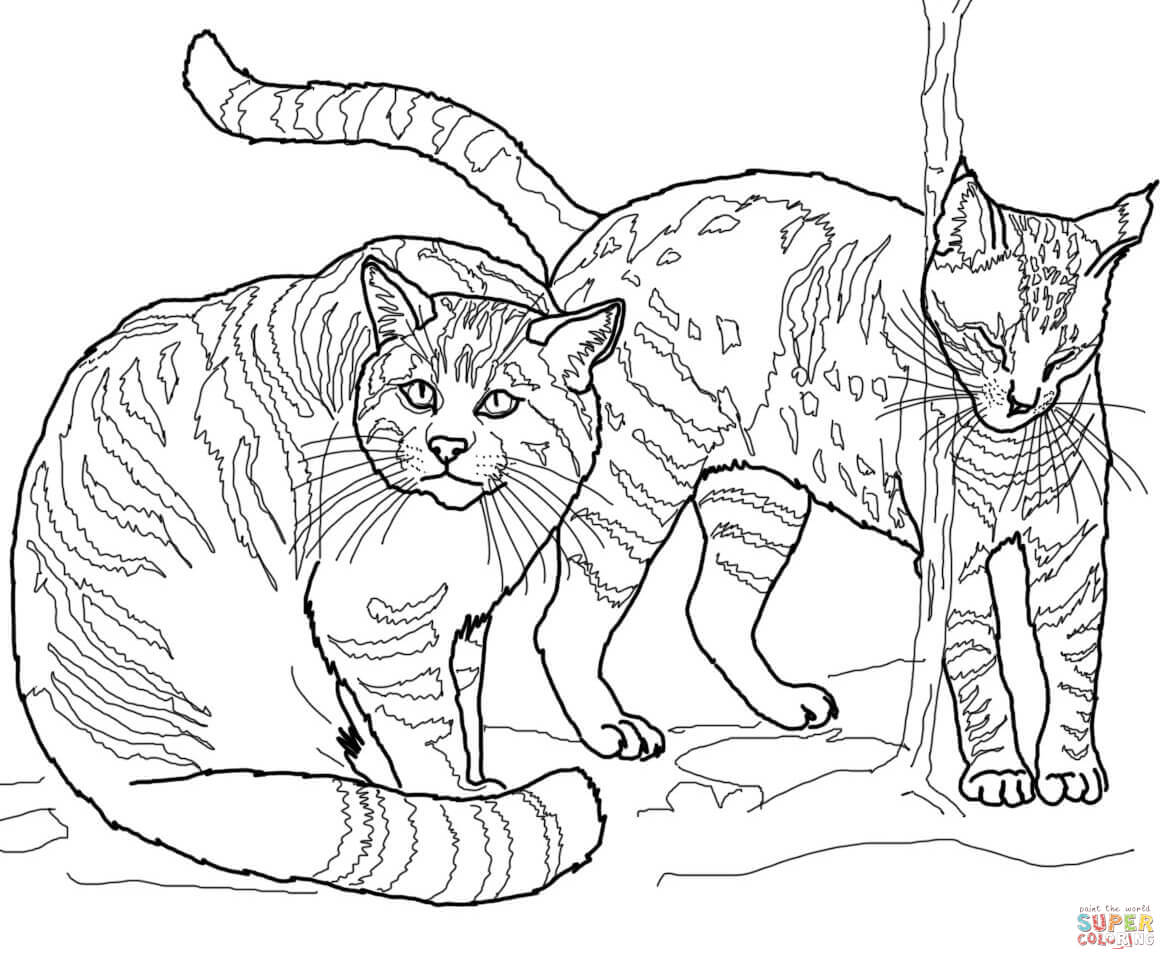 wild cat coloring pages wild cat colouring pages clipart best wild cat coloring pages