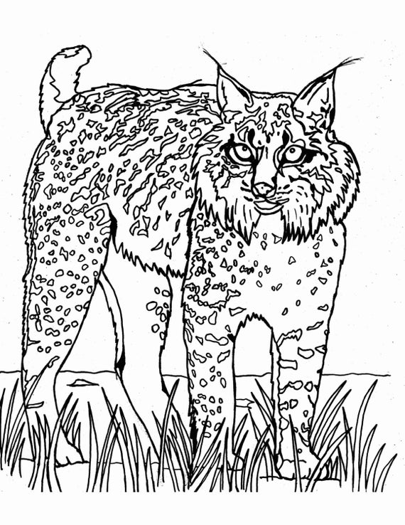 wild cat coloring pages wild cats coloring pages coloring home cat wild pages coloring