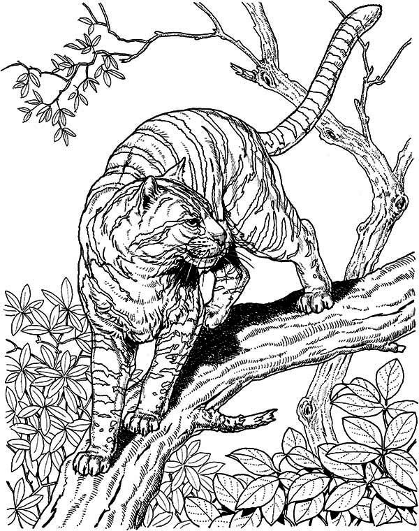 wild cat coloring pages wildcat coloring page free cat coloring pages wild coloring cat pages