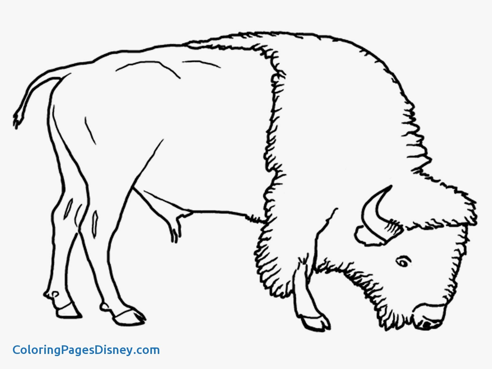 wildebeest coloring page wildebeast wildebeest page coloring