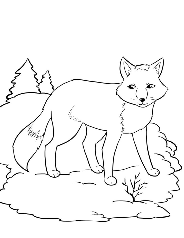 winter animal coloring sheets 12 best images of polar bear worksheet preschool polar winter coloring animal sheets