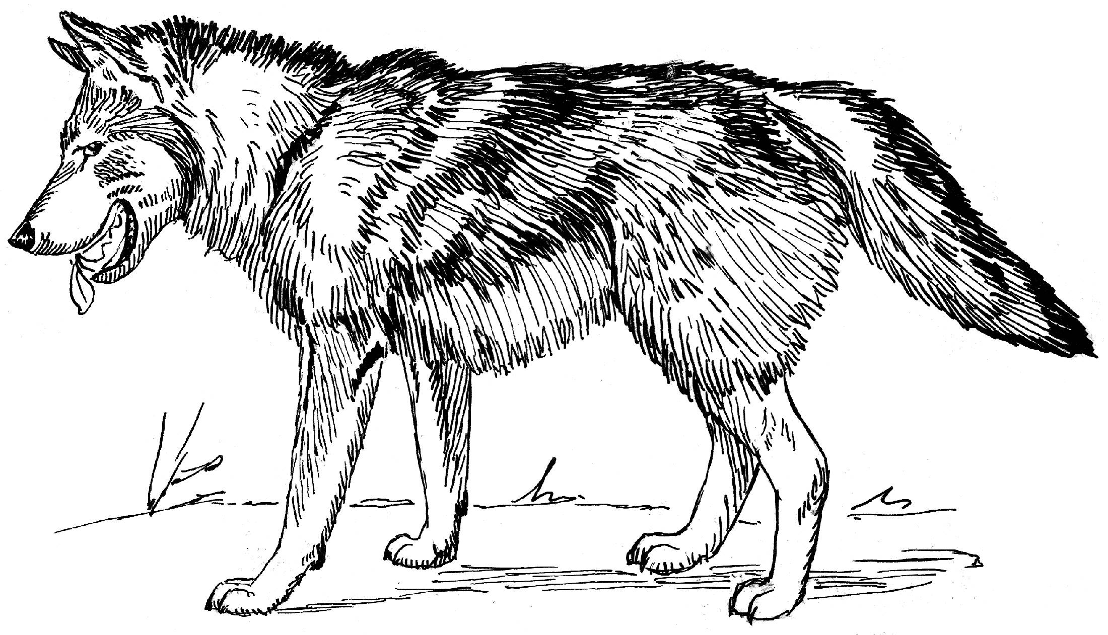 wolf coloring images print download wolf coloring pages theme wolf coloring images