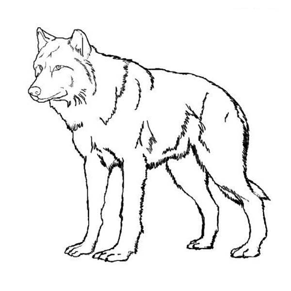wolf coloring images print download wolf coloring pages theme wolf coloring images 1 2