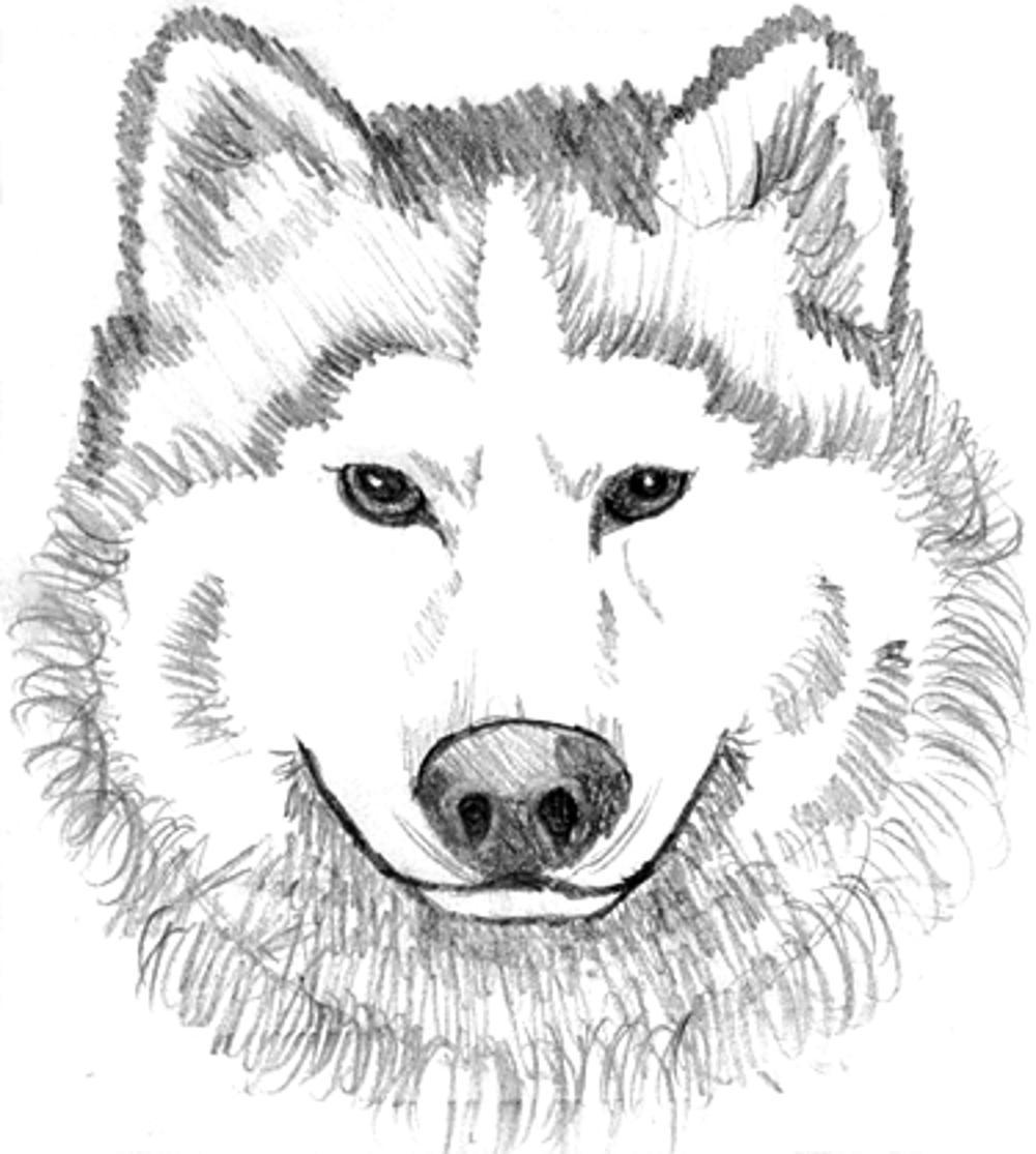 Wolf pictures to print