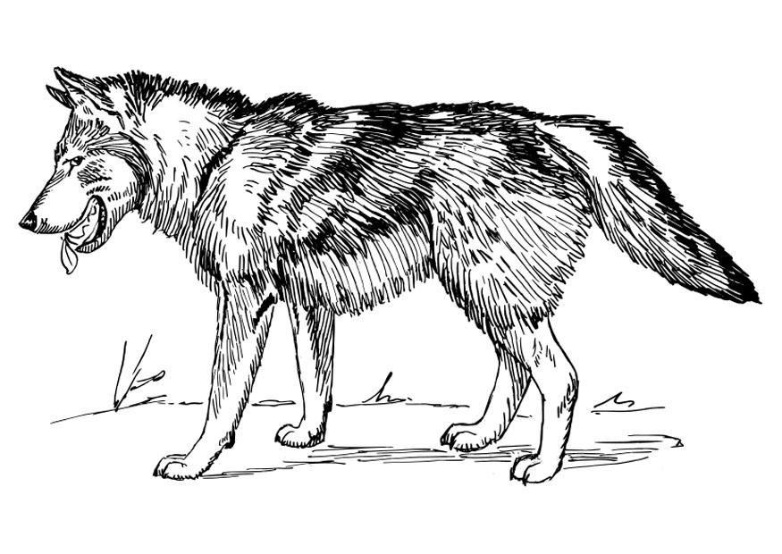 wolf pictures to print wolf to print for free wolf kids coloring pages pictures wolf to print