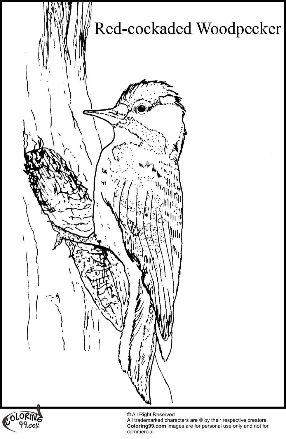 woodpecker coloring page 12 woodpecker coloring pages for kids print color craft page woodpecker coloring