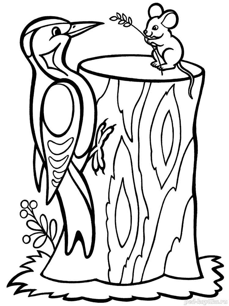 woodpecker coloring page woodpecker hairy coloring page coloring woodpecker page