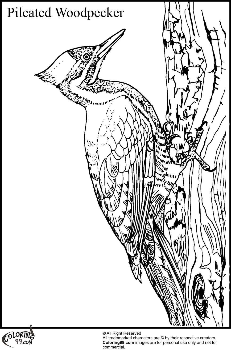 woodpecker coloring page woodpecker pileated coloring page woodpecker page coloring
