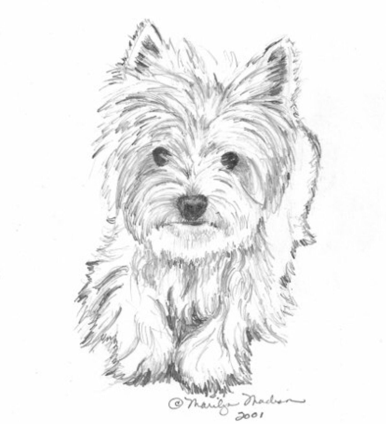 yorkie puppy coloring pages 230 best dessin yorkie images on pinterest yorkie coloring pages puppy