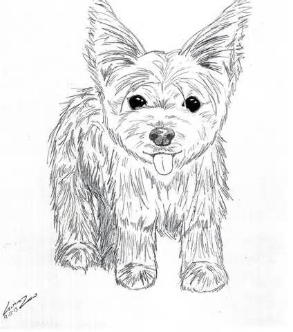 Yorkie puppy coloring pages