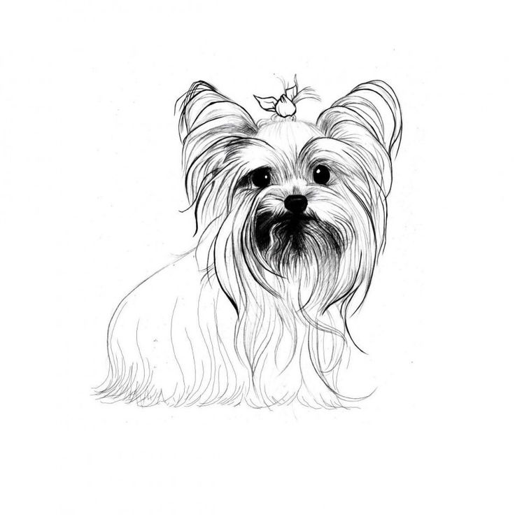 yorkie puppy coloring pages how to draw a yorkie step by step pets animals free pages yorkie puppy coloring