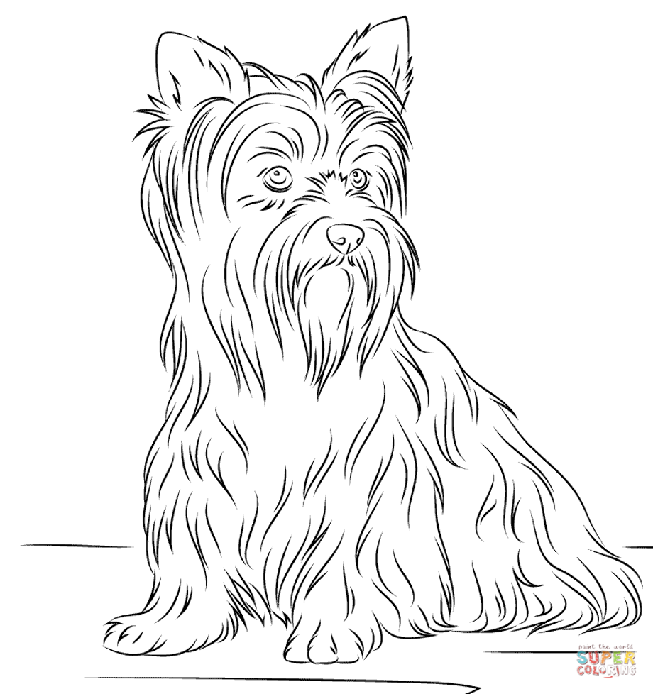 yorkie puppy coloring pages silky terrier yorkie puppy coloring pages print pages yorkie coloring puppy