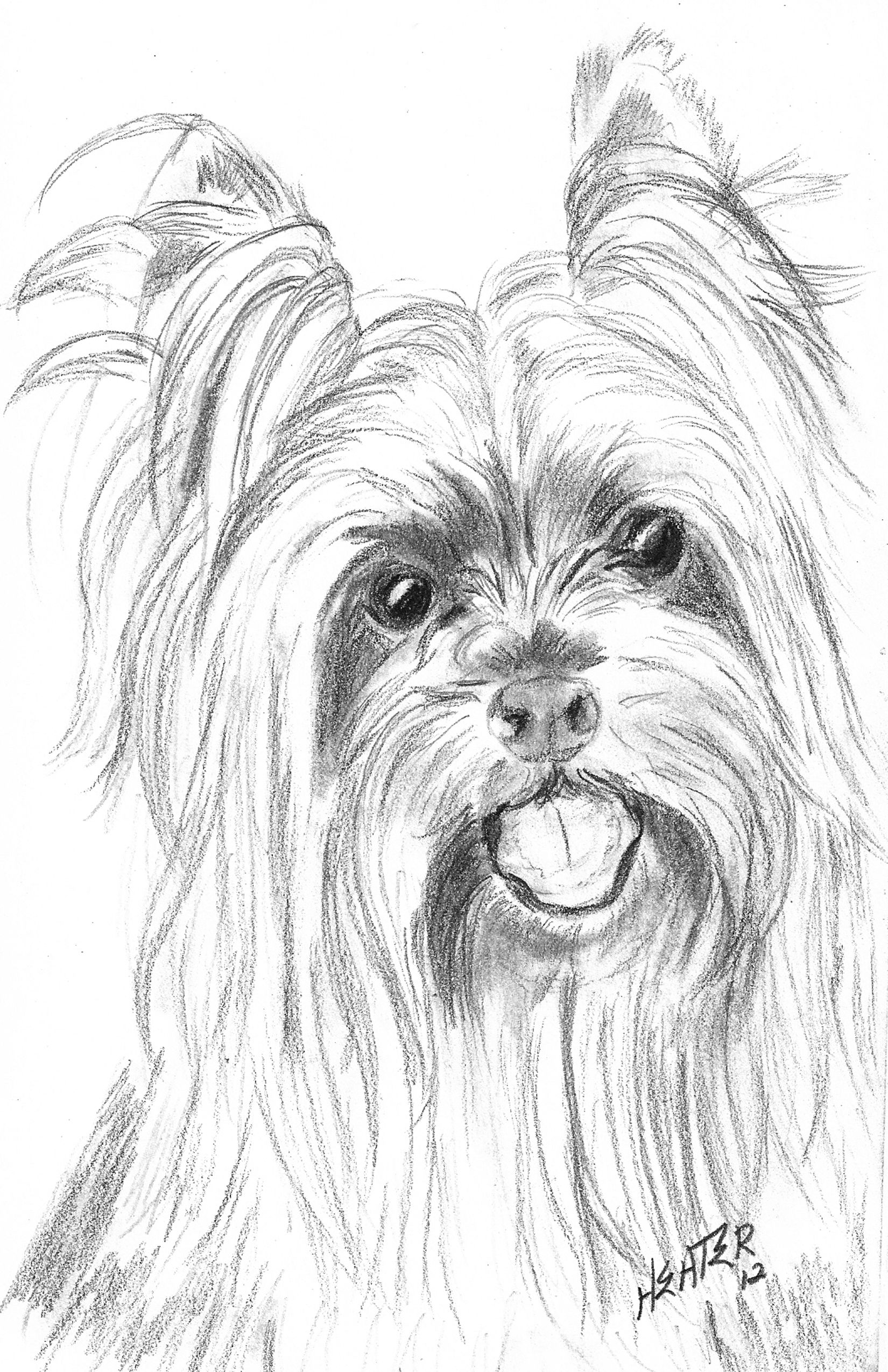yorkie puppy coloring pages teacup yorkie coloring pages coloring pages yorkie puppy pages coloring