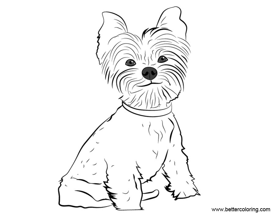 yorkie puppy coloring pages yorkie coloring pages line drawing free printable coloring yorkie puppy pages