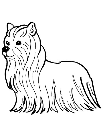 yorkie puppy coloring pages yorkie dogs cute puppies coloring coloring pages yorkie coloring pages puppy