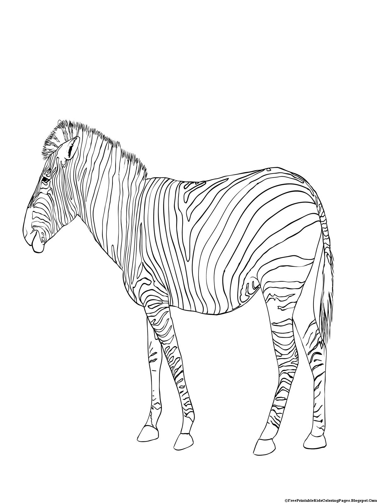 zebra colouring pages to print free printable zebra coloring pages for kids animal place to colouring zebra print pages
