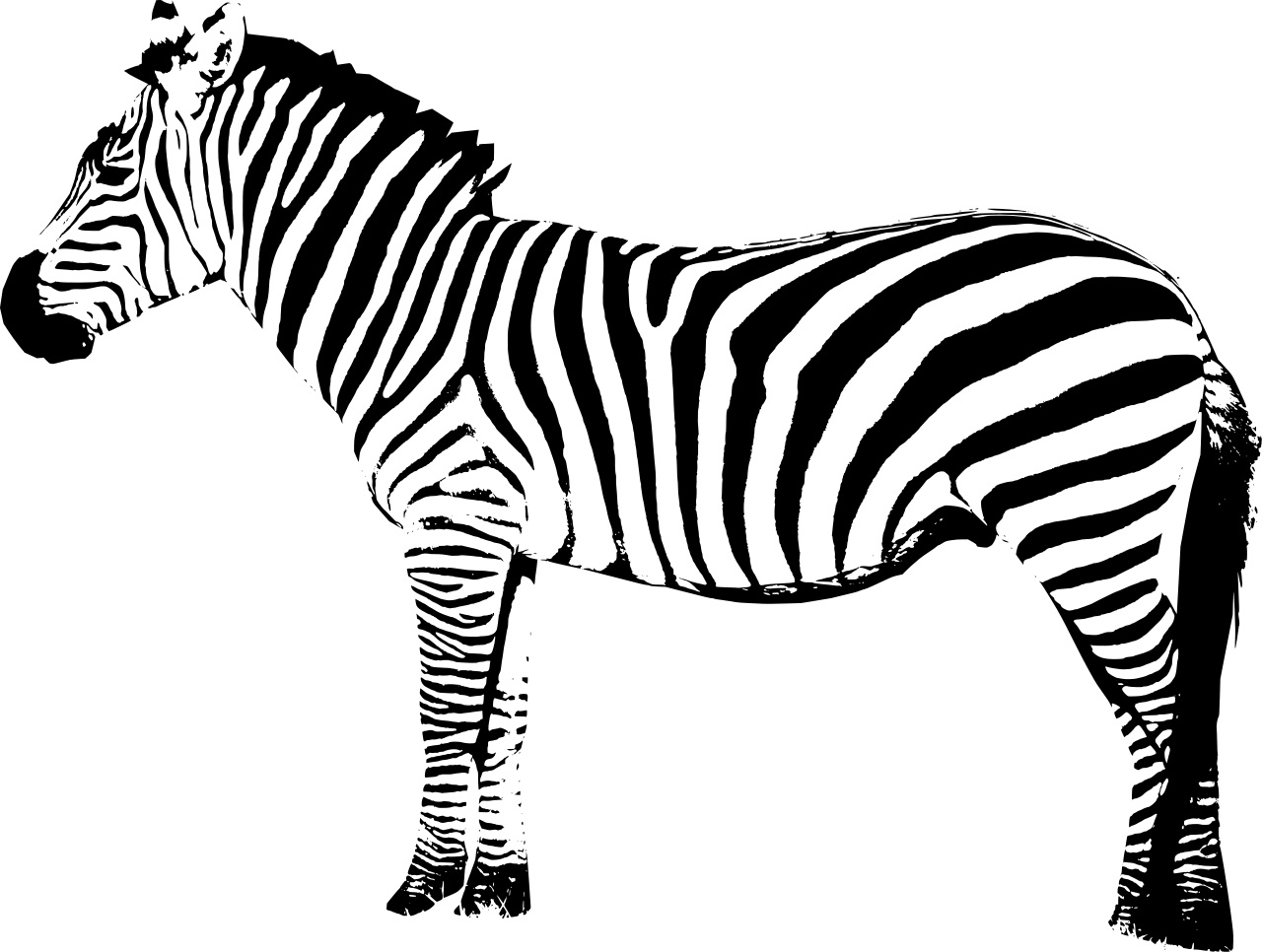 zebra colouring pages to print zebra coloring pages download and print zebra coloring pages print pages zebra to colouring