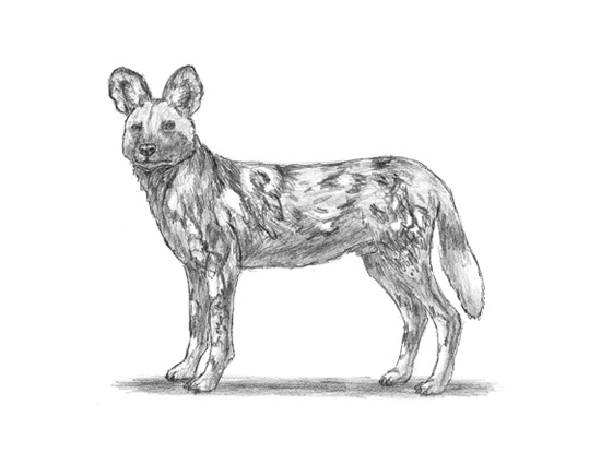 african wild dog coloring pages african wild dog coloring page at getcoloringscom free wild pages coloring african dog
