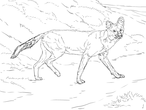 african wild dog coloring pages african wild dog or painted hunting dog coloring page pages wild dog african coloring