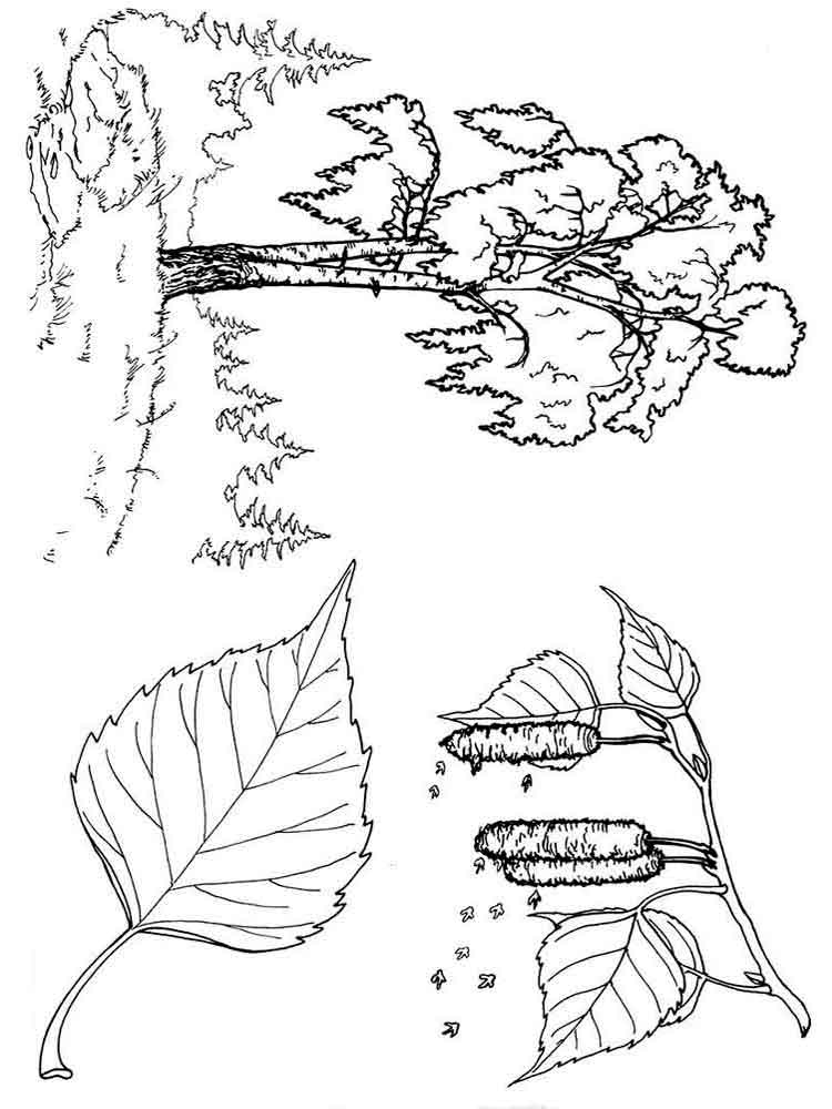 coloring page of a tree 13 best tree coloring pages for kids updated 2018 of tree page coloring a