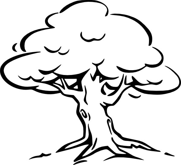 coloring page of a tree bare tree coloring page at getcoloringscom free a of coloring tree page