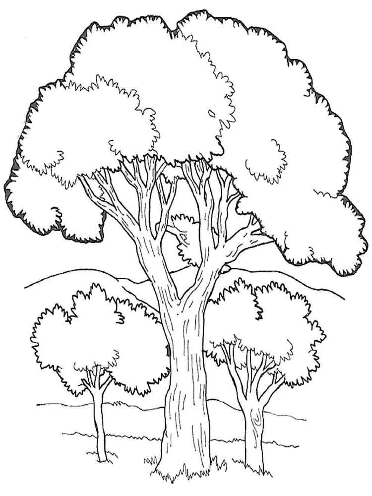 coloring page of a tree best christmas tree outline 7027 clipartioncom page tree a coloring of