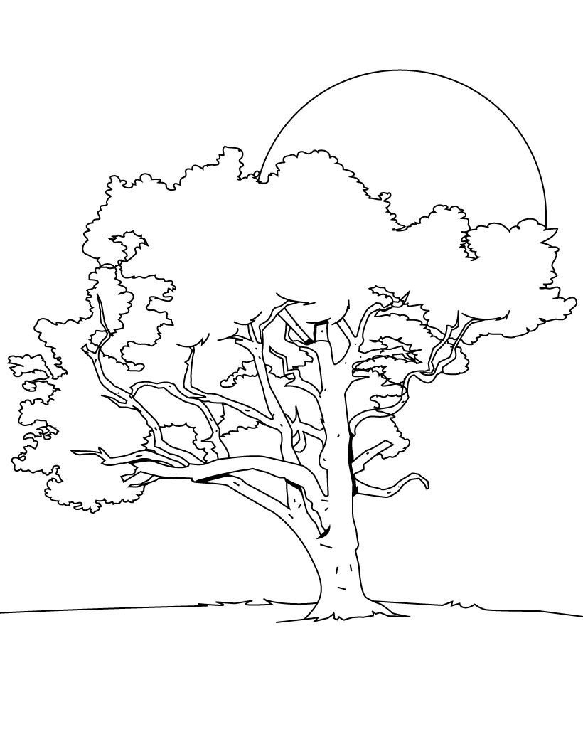 coloring page of a tree tree coloring pages coloring pages to print tree of page a coloring