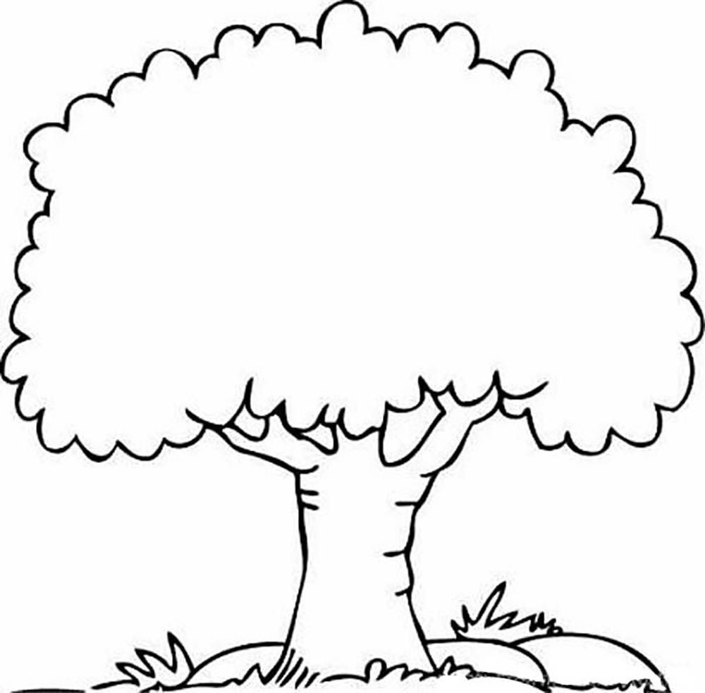 coloring page of a tree tree drawing outline free download on clipartmag a tree page of coloring