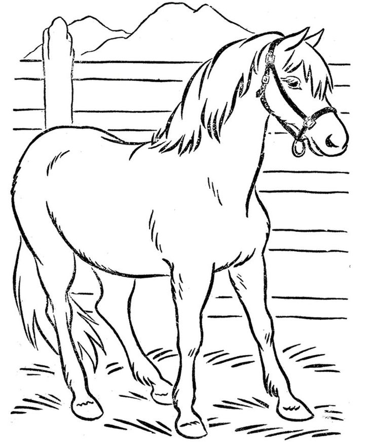 cool horse coloring pages cartoon horse coloring pages k5 worksheets farm animal horse pages cool coloring