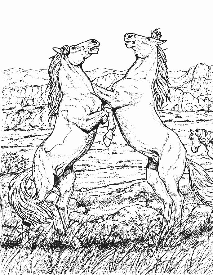 cool horse coloring pages color pages to printcool horses pinterest cool pages horse coloring